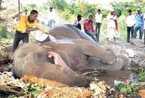 Handlers abandon injured elephant by the roadside