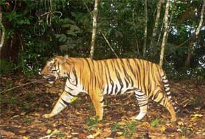 Delhi hosts global meet on tigers; concern expressed over poaching