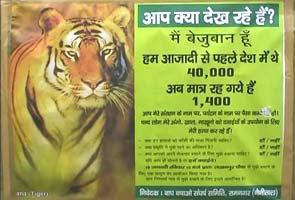 short essay project tiger