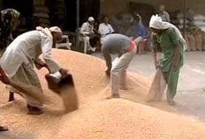 Food activists slam wheat export decision