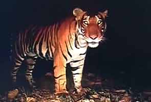 Ban on tiger tourism to continue; Centre asked to frame guidelines