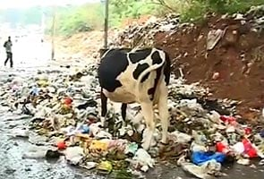 Bangalore garbage to be collected by Sunday