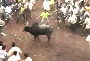 Supreme Court declines to stay Jallikattu