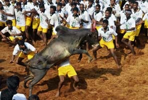 One dead, 67 injured in Tamil Nadu during Jallikattu events