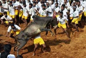 One dead, 67 injured in Tamil Nadu during Jallikattu events