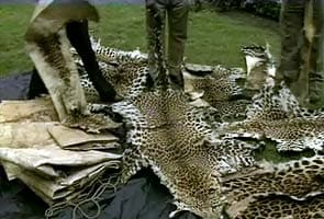 34 leopard deaths reported in Uttarakhand this year
