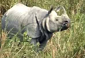 Poachers kill 13 rare rhinos in Assam