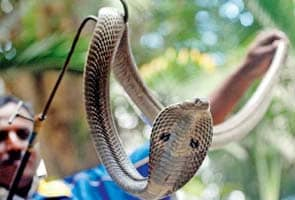 Wanted: A snake catcher at IIT-Bombay
