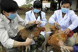 Bird flu spreads to southern China, 23 dead