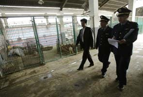 China mobilises to fight new bird flu; Japan, Hong Kong on guard