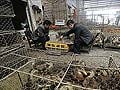 China reports three new bird flu deaths, toll hits 35