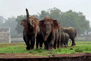Wild elephants enter stadium in Rourkela, spread panic