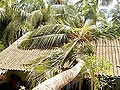 Cyclone Phailin: Normalcy to be restored in Srikakulam soon