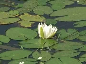Hide BJP's lotus, says Congress leader; what about your hand, counters BJP