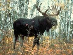 Moose milk? UN food agency says yes please