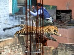Meerut: City reopens after leopard attack