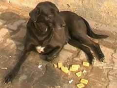 Dog detained for allegedly biting ex-cop in Uttar Pradesh