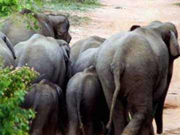 Three elephants killed as train runs into herd in Assam