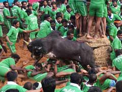 DMK Urges Tamil Nadu Government to Seek Review of Supreme Court Ban on Jallikattu
