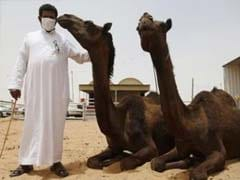 Saudi Homes In on Camels in Bid to Combat MERS