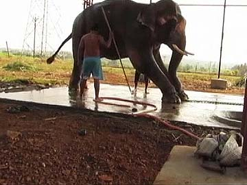 13-Year-Old Elephant Sunder's Release May Be Delayed