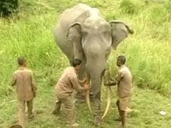 Jaipur: Elephant Goes Wild, Kills Mahout