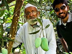 As Modi Fever Grips Nation, Mango Cultivator Names Hybrid 'Namo Aam'