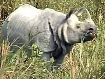 No Proposal for Rhino Horn's Legal Trade in South Africa