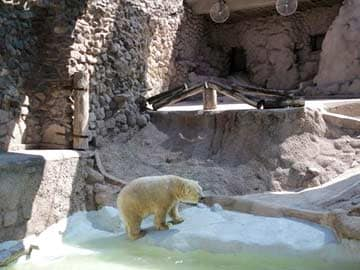 Argentina zoo freezes polar bear move to canada for What happens to concrete if it freezes