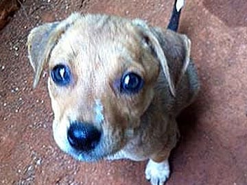 Goa: Rabies Infected Dog Bites 25 People in Village
