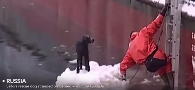 Video of People Helping Animals is Just What the World Needs Right Now