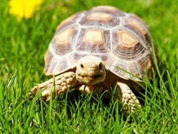 Over 100 Wild Tortoises Seized From Women Passengers In Kerala