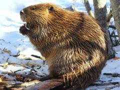 Invasive Species Threaten Global Biodiversity