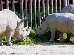 Submit Proposal to Stop Rhino Poaching in Assam: Harsh Vardhan