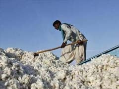 Cotton Exports Seen Falling 41% as China Buys Less