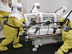 Hollow Tree Was Ebola's Ground Zero: Scientists