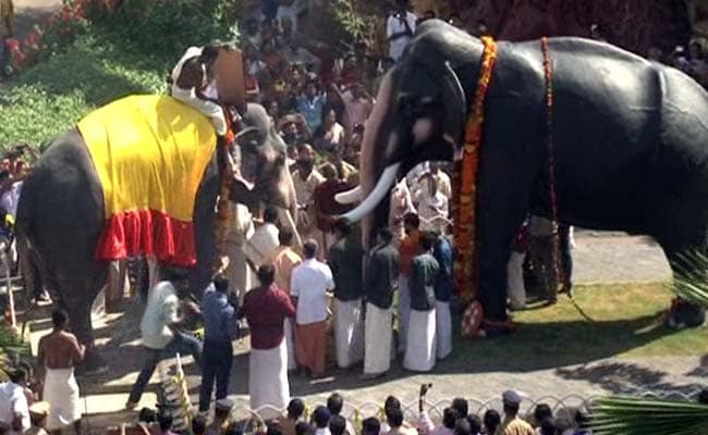 Why This Kerala Elephant's Death Anniversary is Celebrated