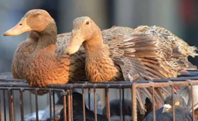 H5N8 Strain of Bird Flu Found in Taiwan