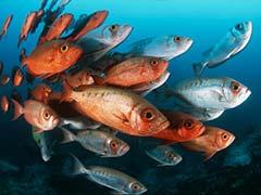 UN Moves Toward Major Treaty For Ocean Biodiversity
