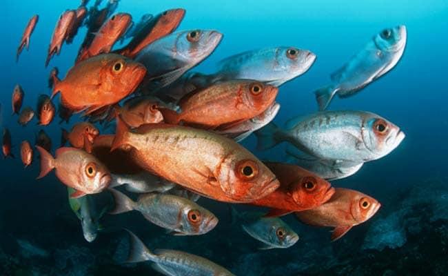 Fish Use 'Sixth Sense' to Detect Water Flows