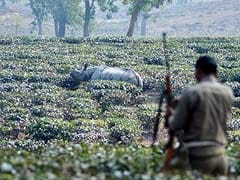 3 Poachers Killed by Forest Guards in Assam's Kaziranga National Park