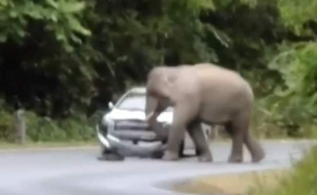 Viral Video: Thai Elephant Hates Tourists, Trashes Car in  National Park