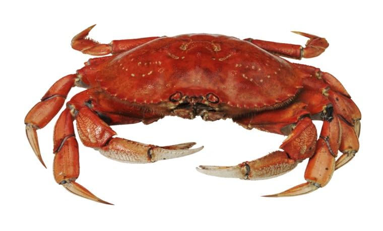 Crabs crab recipes: crab food recipes