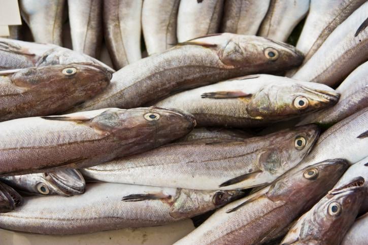 Fish Names  English to Malayalam Translation  Cooking