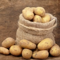 Eat Potatoes Galore to Lose Weight Now!