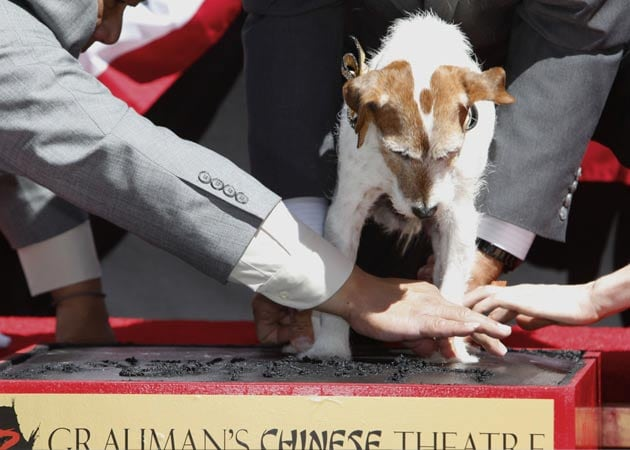 Uggie leaves paw prints at famed Grauman's theatre