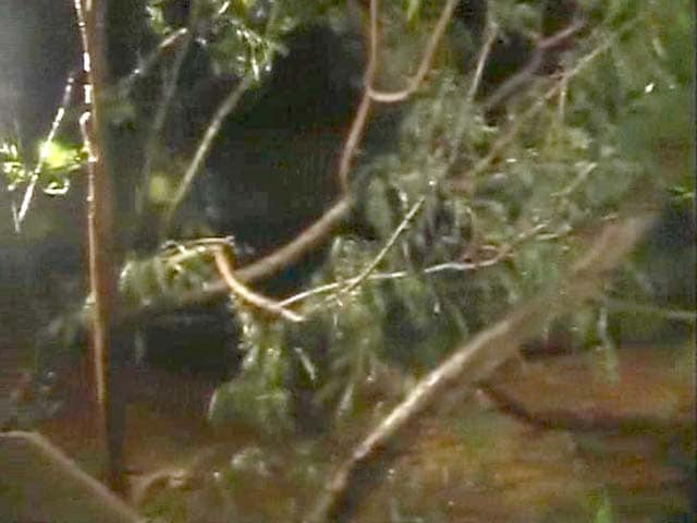 Video : Cyclone Phailin impact: Trees fall outside cyclone centre in Andhra Pradesh