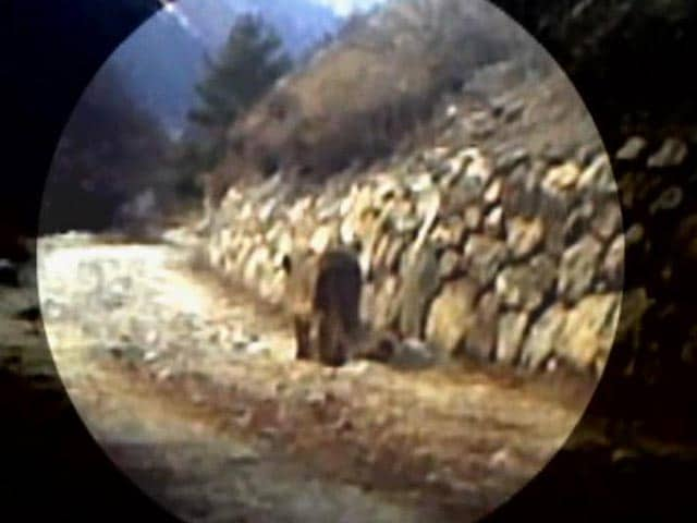 Video : Two snow leopards sighted at Gangotri National Park