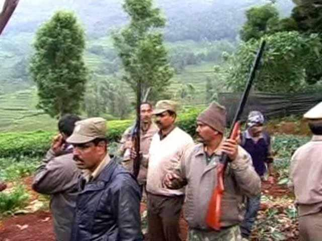 Video : Tiger scare near Ooty shuts 45 schools, massive hunt after woman killed