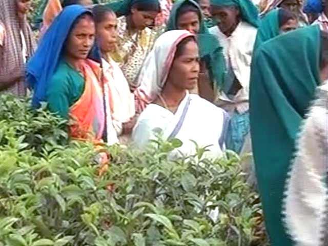 Video : Debate over chai and 'chaiwala' brews in Assam's tea town